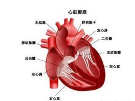 宝宝确诊先天性心脏病,为什么早期没有发现?_儿童护理心脏病-室间隔-青紫