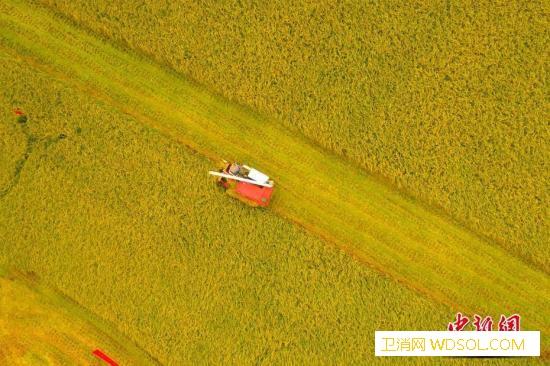 九部门:做好秋粮收购避免发生大范围农_秋粮-收购价-产区-