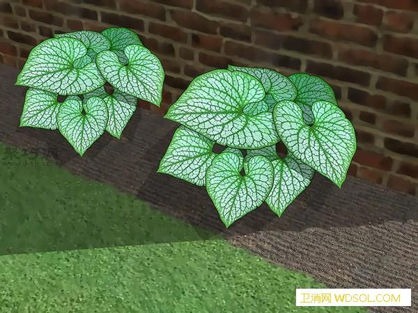 怎样减少适宜苔藓生长的条件除掉草坪苔藓教程_苔藓-除掉-草坪-适宜- ()