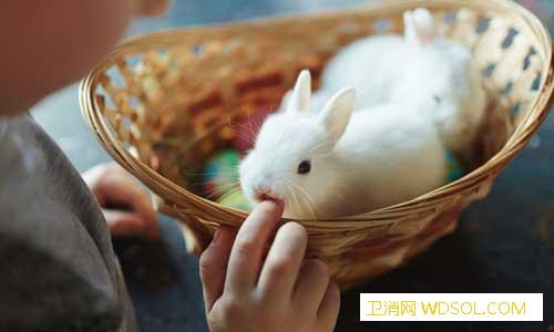 宠物是否传染新冠病毒需研究_健康报-核酸-传染-感染-